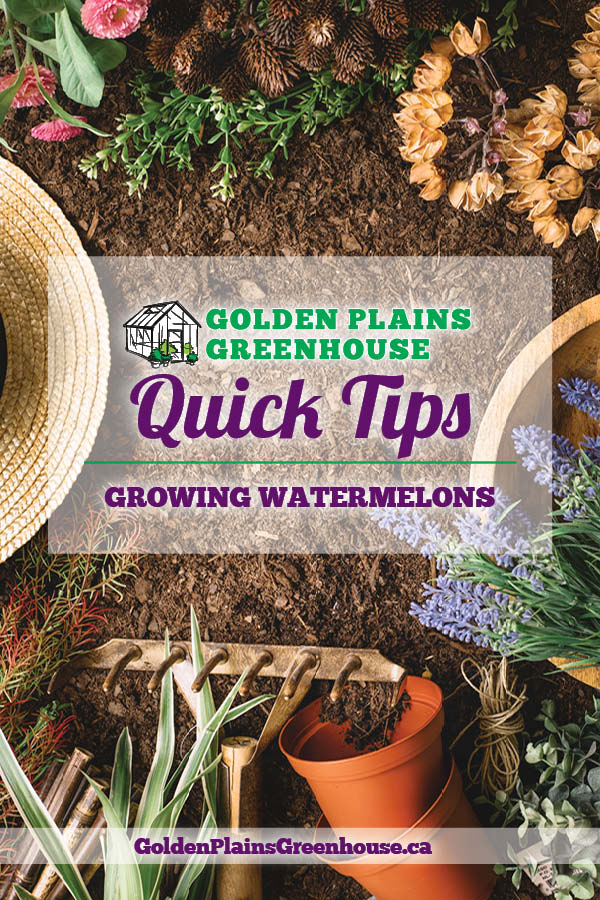 Quick Tips - Growing Watermelons