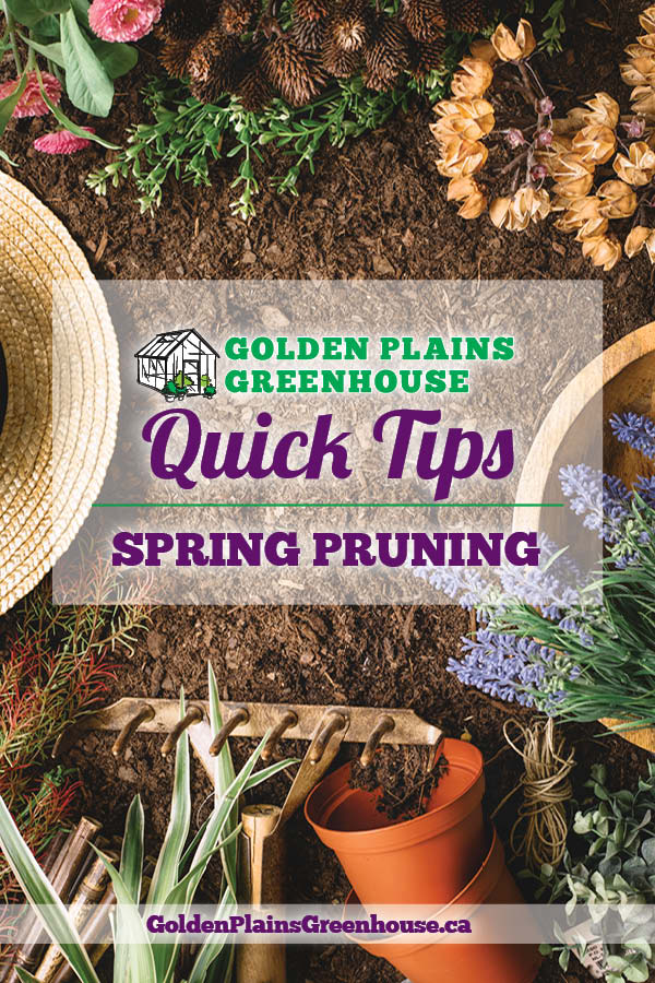 Quick Tips - Spring Pruning